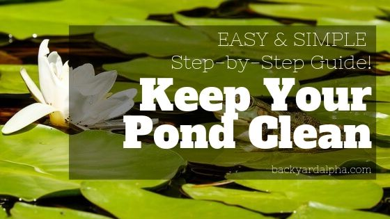 How to Keep a Natural Pond Clean EASY & Simple Step-by-Step Guide!