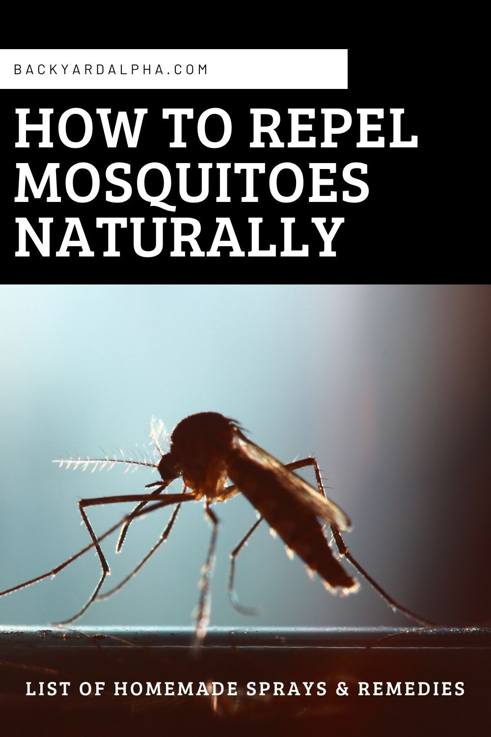 How To Repel Mosquitoes Naturally With Homemade Sprays