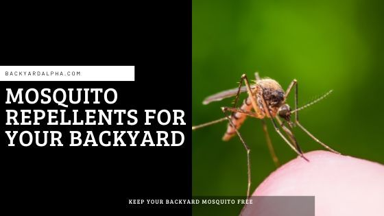 How do I keep mosquitoes out of my yard