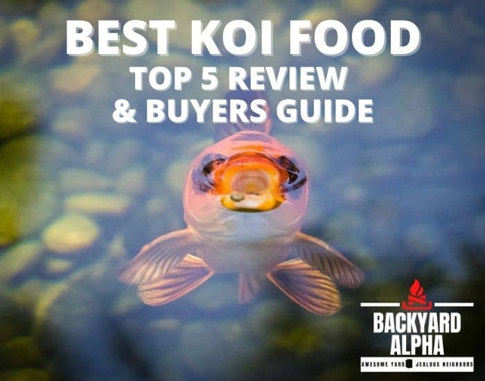 Best Koi Food