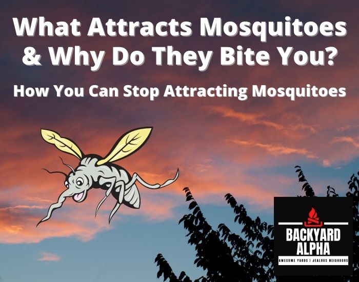 What Attracts Mosquitoes & Why Do They Bite You