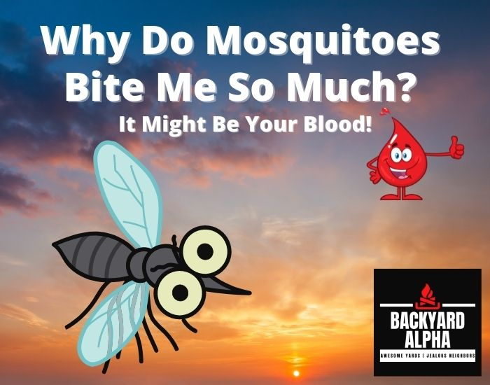 Why Do Mosquitoes Bite Me So Much