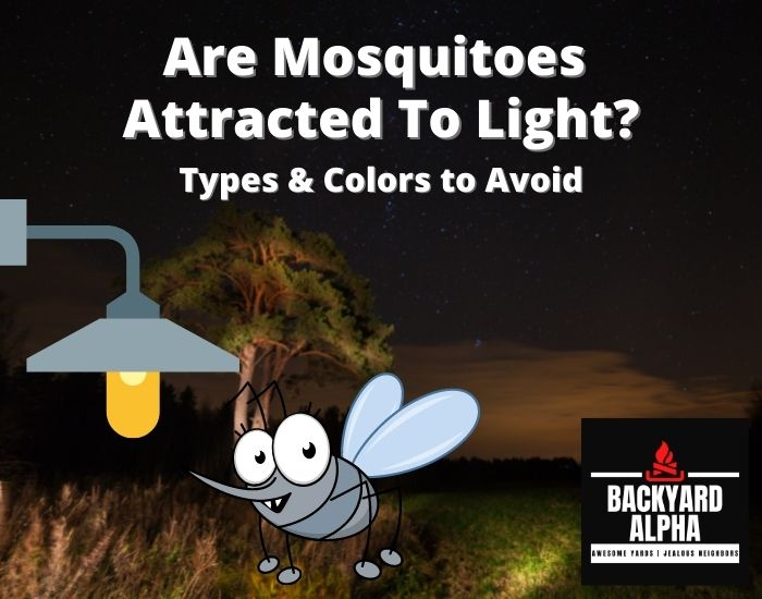 Are Mosquitoes Attracted To Light