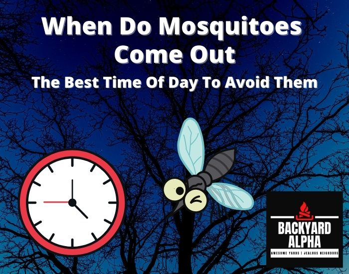 When Do Mosquitoes Come Out & The Best Time Of Day To Avoid Them