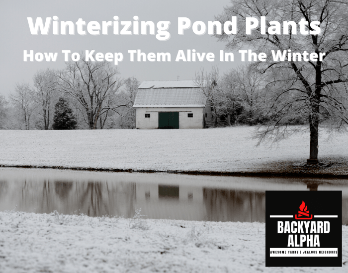 How To Keep Pond Plants Alive In The Winter