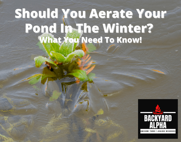 Should You Aerate Your Pond In The Winter What You Need To Know!